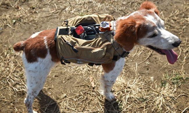 Kamerával és GPS-szel felszerelt kutya keresi a túlélőket