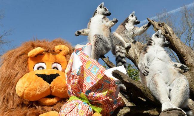Így örülnek az állatkert lakói a húsvéti meglepetésnek - képgaléria