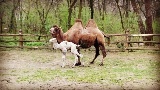 Tevecsikó született a debreceni állatkertben