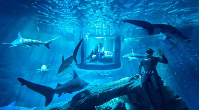 Cápák között hajthatják álomra fejüket a szerencsés nyertesek - videó