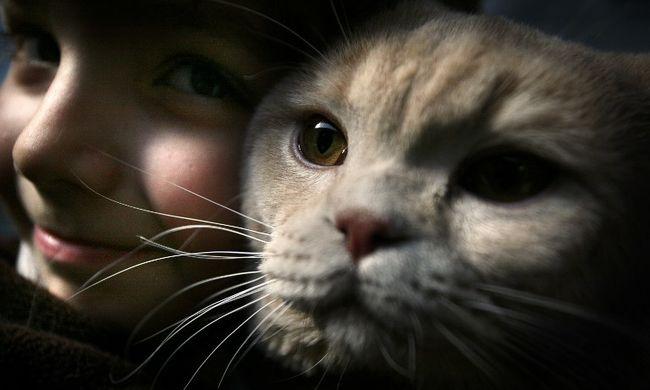 Elmebeteg lehet, ha macskája van