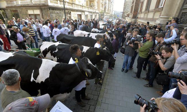 Tehenekkel tüntetnek a gazdák Budapesten