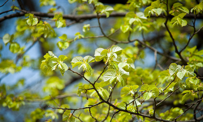 Zöldebbé teszi a Földet a sok szén-dioxid