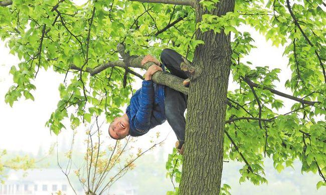 Pénzbüntetést kell fizetnie annak, aki fára mászik a parkban