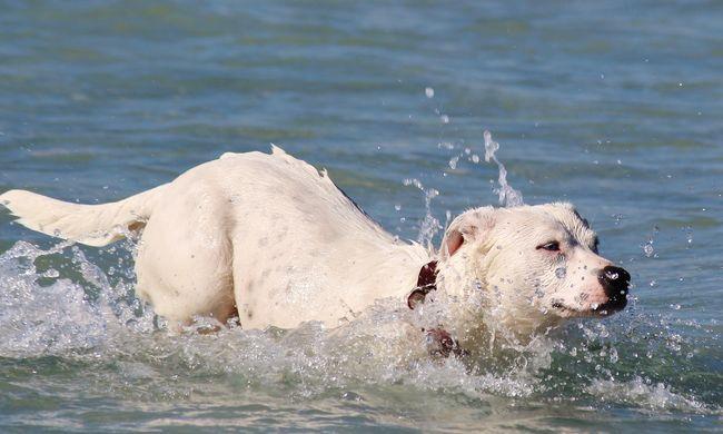 Három kutya is elpusztult, miután ittak a tóból