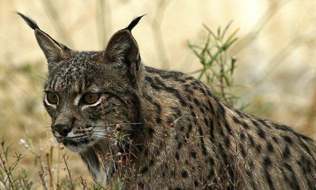 Nagy erőkkel keresik a kegyetlen gyilkost, aki megcsonkított egy vadállatot