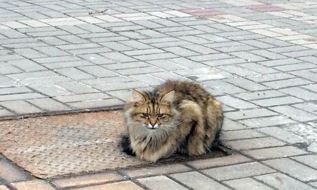 Egy éve nem mozdul a macska, akit elhagytak a gazdái
