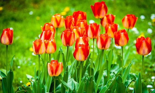 Virágmagokkal töltenék meg a lőszereket