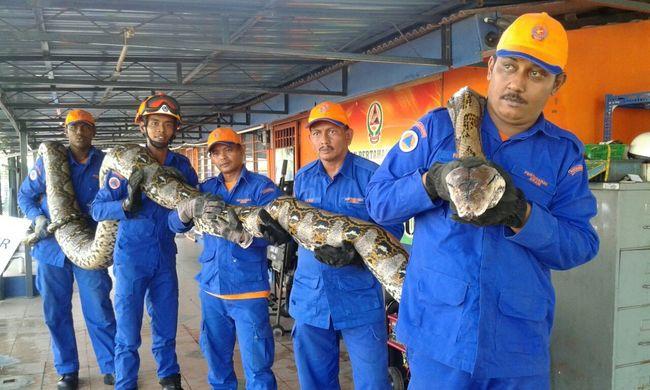 Rekordméretű kígyót fogtak egy építkezésen