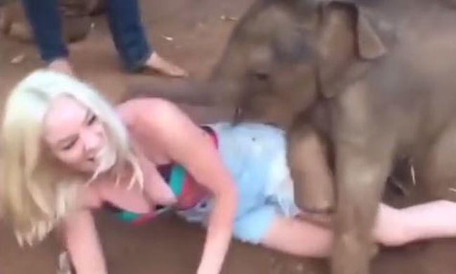 A bébielefánt imádja csiklandozni és ölelgetni a turistákat