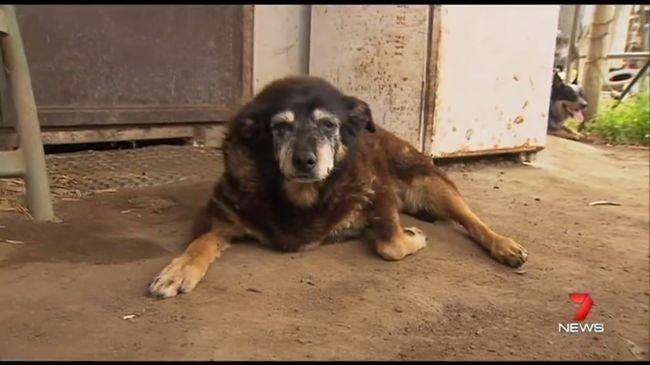 Meghalt a világ legidősebb kutyája