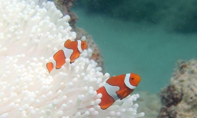 Kifehéredtek a meleg víztől a korallok a Sydney-öbölben