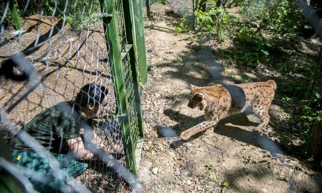 Május 20-án nyílik meg az új pécsi állatkert