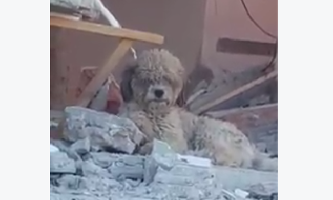 Összedőlt otthonukban várta a hűséges kutya a gazdáit, de meghaltak a földrengésben - videó