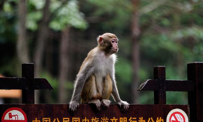 Majom ölte meg a kínai üzletembert