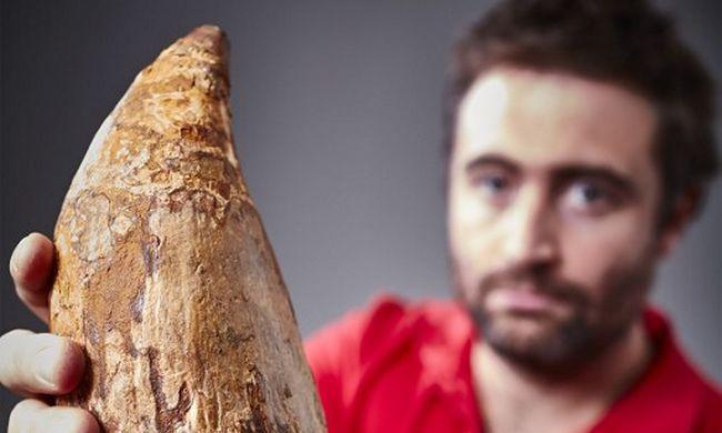 Ötmillió éves bálnaevő ámbráscet foga volt a strandon