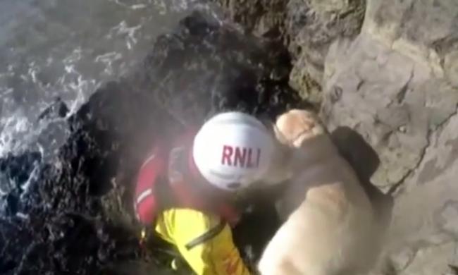 30 métert zuhant a sziklafalról egy kutya, mentőcsónakkal mentek érte - videó