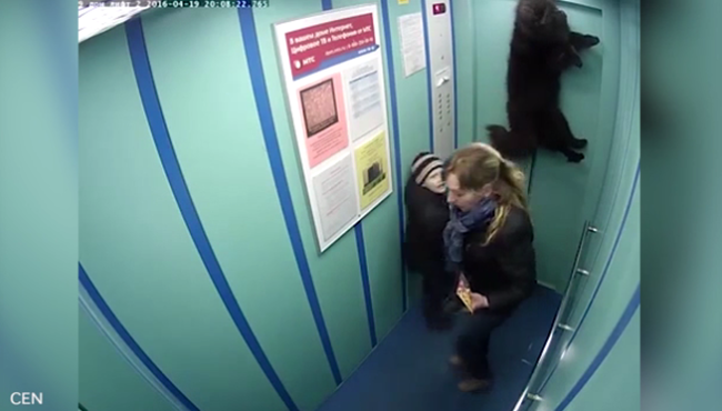 Kis híján felakasztotta a lift a kutyát - sokkoló videó