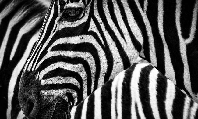 Elképesztő béna csalást leplezett le az állatkert látogatója, így próbálták átverni a vendégeket