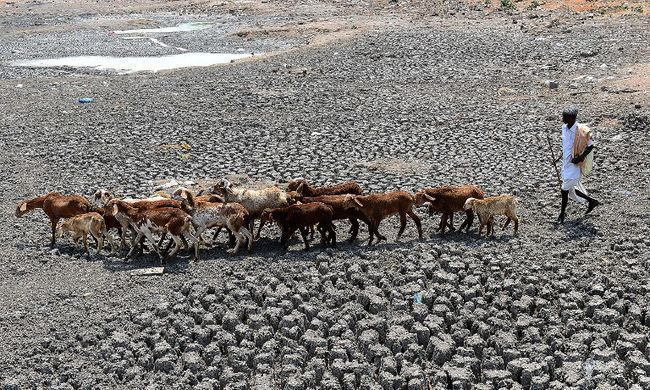 Tízezrek ölték meg magukat a kibírhatatlan hőség és az eső miatt
