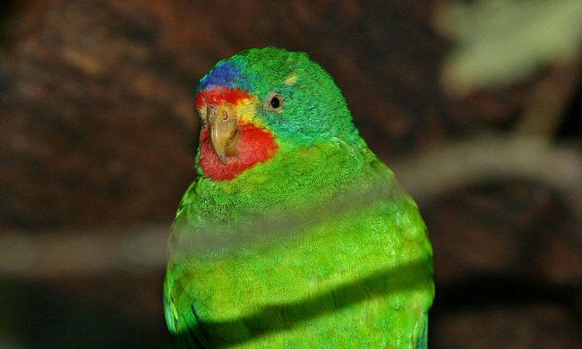 Ezek az állatok kerültek fel a veszélyeztetett fajok listájára