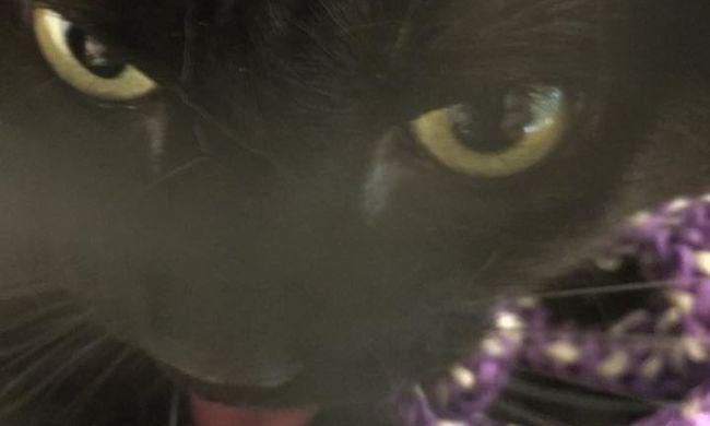 Ziháló, fuldokló macskát mentettek ki, üveg mögé szorult