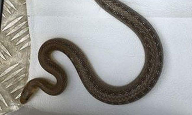"""Megrémült a helyszínelő, mert egy """"kígyót"""" talált a táskájában"""