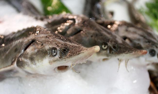 Kényszer: dunai hal helyett kazahsztánit szolgálnak fel a Duna parti étteremben