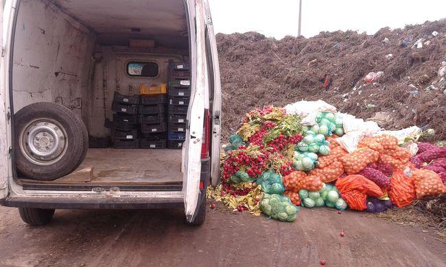 Több mint hat tonna zöldség és gyümölcs eladását tiltották meg