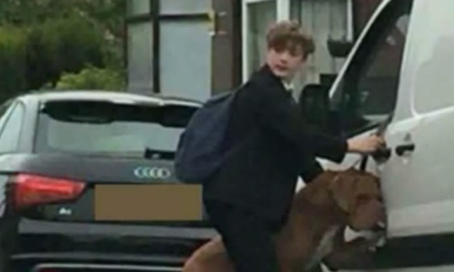 Beakadt a kutya póráza a kocsiba, egy 13 éves fiú mentette meg az életét - videó