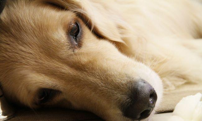 Bezár a kutyavásár: felszámolják az egyik legnagyobb kutyahúspiacot