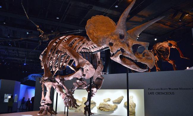 Két új dinoszaurusz fajt fedeztek fel