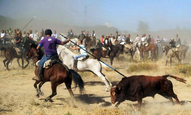 Bírósághoz fordulnak, mert bikákat akarnak ölni