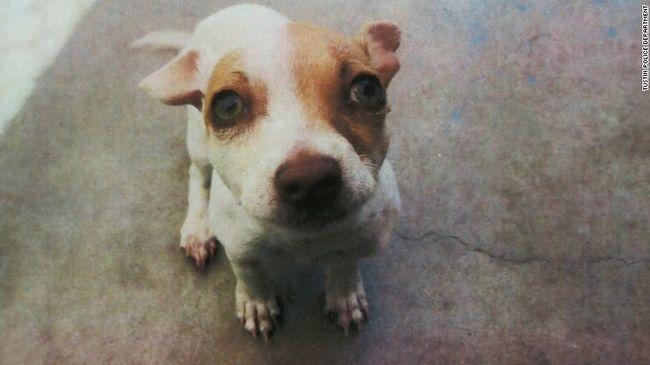 Drogot találtak egy kutya szervezetében a rendőrök