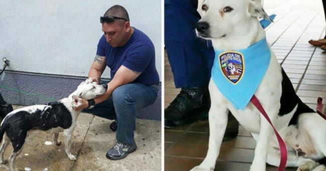 Otthont és munkát is kapott a kutya, aki besétált a rendőrségre