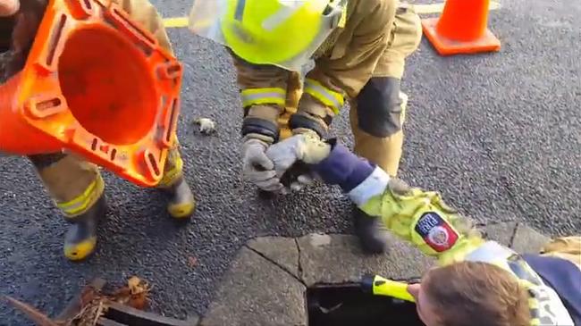 Közlekedési bója is kellett a különleges kiskacsamentéshez - videó