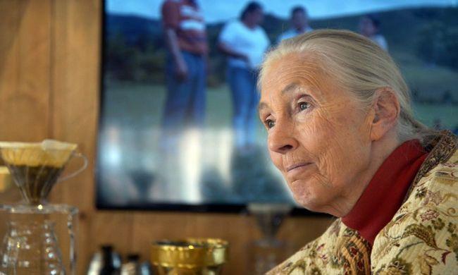 """""""Az igazán szegényektől nem várható el, hogy aggódjanak az élővilágért"""" - Jane Goodall Budapesten járt"""