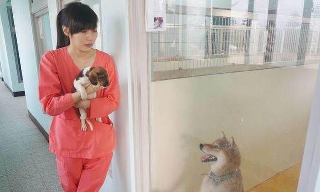 Megölte magát a kutyákat elaltató állatorvos, mert nem bírta elviselni az online támadásokat
