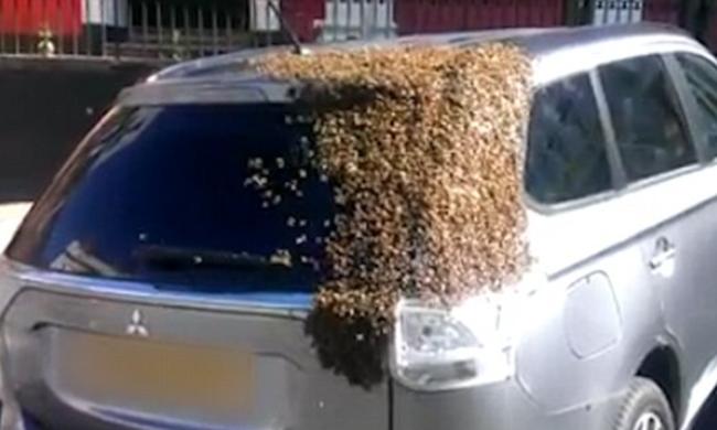 Húszezer méh követte a kocsit, mert a királynő a csomagtartóban rekedt - videó