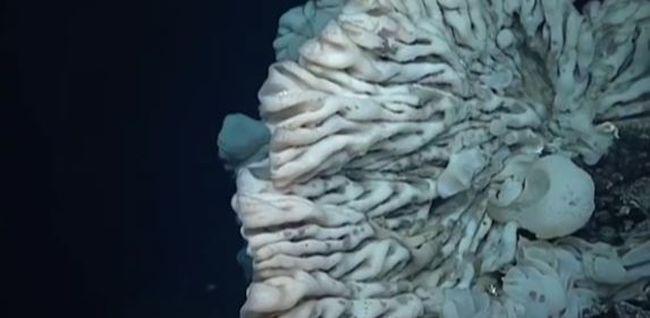 Akkora ez a tengeri szivacs, mint egy családi autó - videó