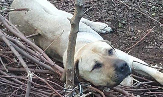 Erdő közepére láncolta le a kutyát, keserves nyüszítése vezette nyomra a családot