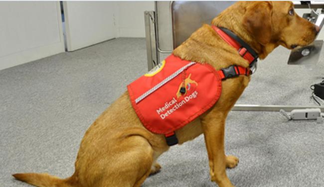 Malária kiszagolására képzik a kutyákat
