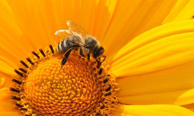 Gondolta volna? Ahol gazdagok az emberek, ott a méhek is jobban érzik magukat