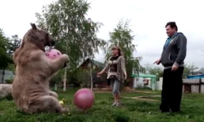 Befogadtak egy medvét 23 évvel ezelőtt, azóta is együtt élnek - videó