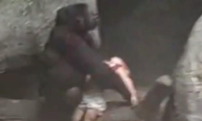 20 éve is átesett egy gyerek az állatkerti kerítésen - őt a gorilla mentette meg - videó