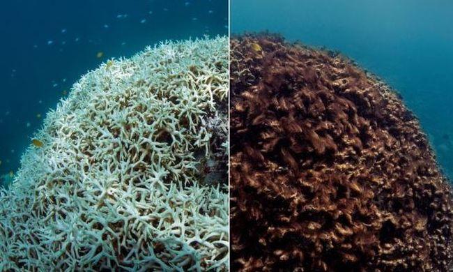 """A """"halál szaga lengi körbe"""": szétrothad a Nagy-korallzátony - videó"""