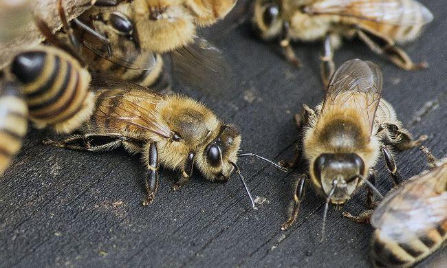 Fura jelenségre lett figyelmes: méz csorgott a szoba falán