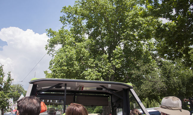 Nem vágnak ki több fát a Városligetben