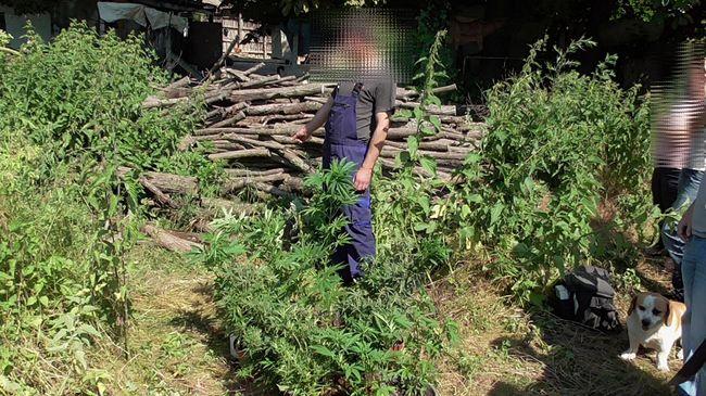 Be volt drogozva, amikor a rendőrök átkutatták házát