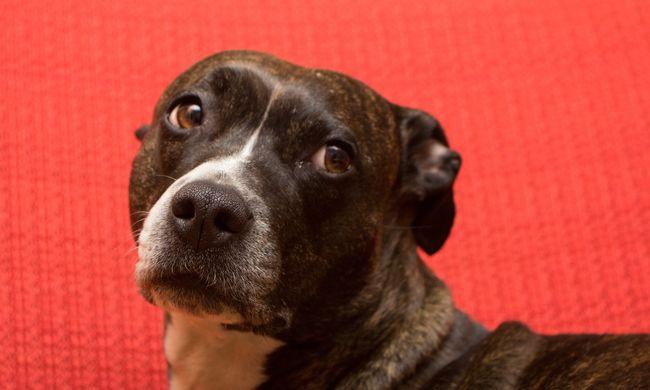 Szomjan halt az erkélyre kicsukott kutya